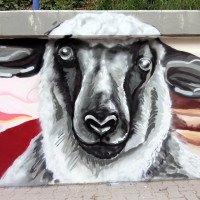ovce_big